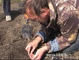 Клад серебрянных монет www.kladtv.ru